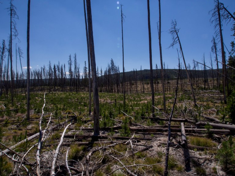 Evidence of past forest fires