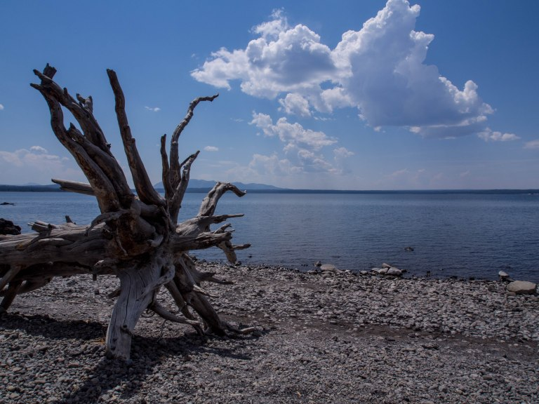 Driftwood, Yellowstone Lake