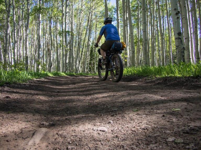 Smooth riding through a shady aspen grove.