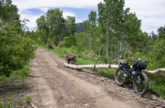Lots of downed trees from avalanches.