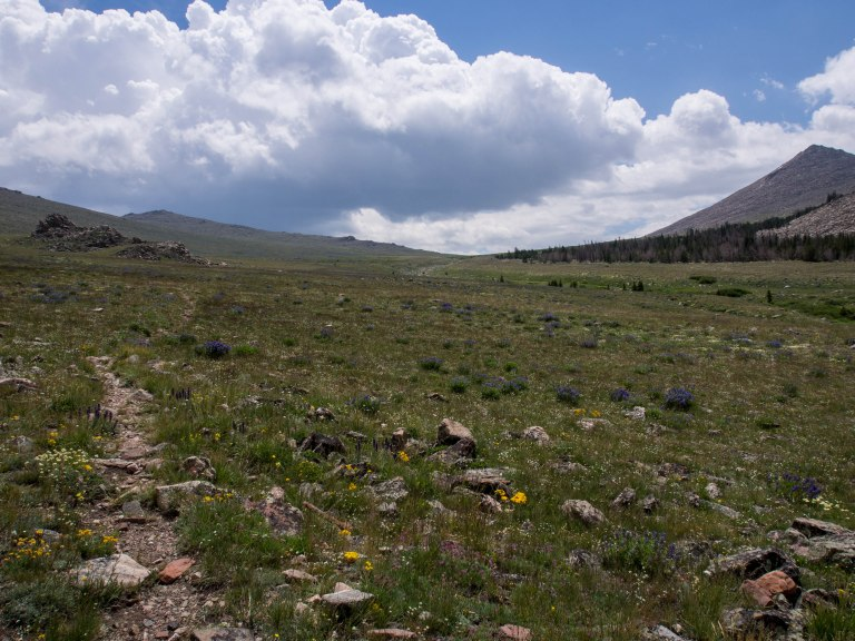 Looking up the alpine plateau toward the saddle we would cross several miles in the distance.