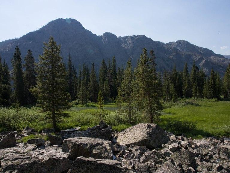 Alpine meadow.