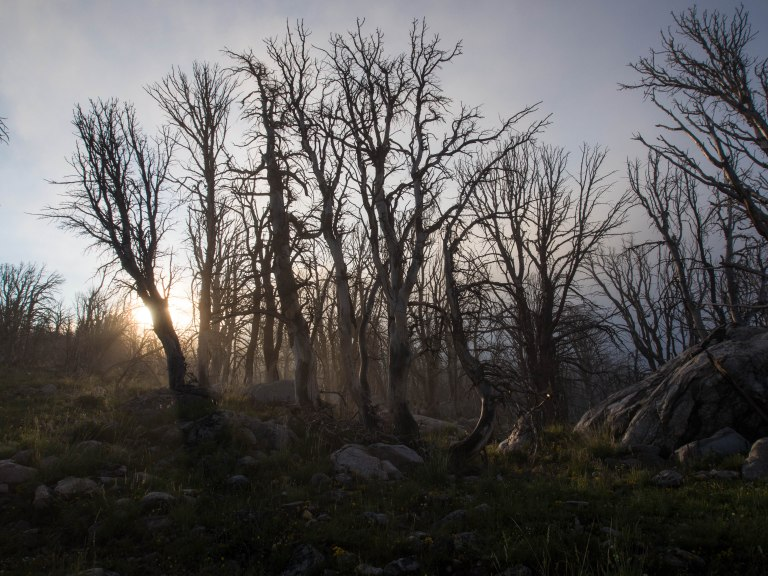 Early morning hiking through the eerie burned forest.