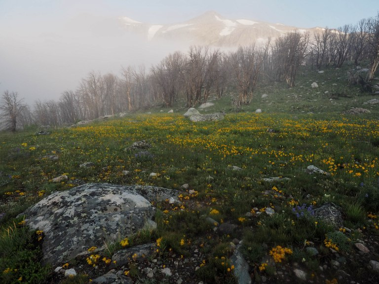 Transition from forest to alpine tundra.