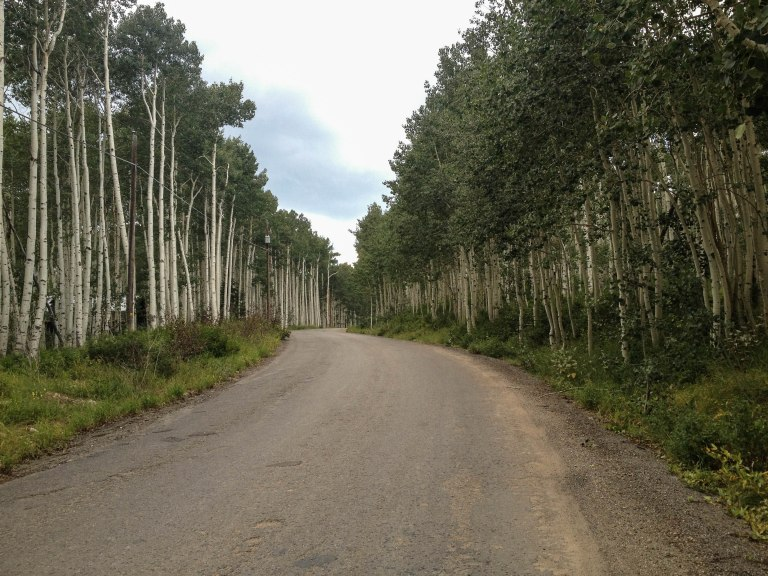 Up into the aspens.