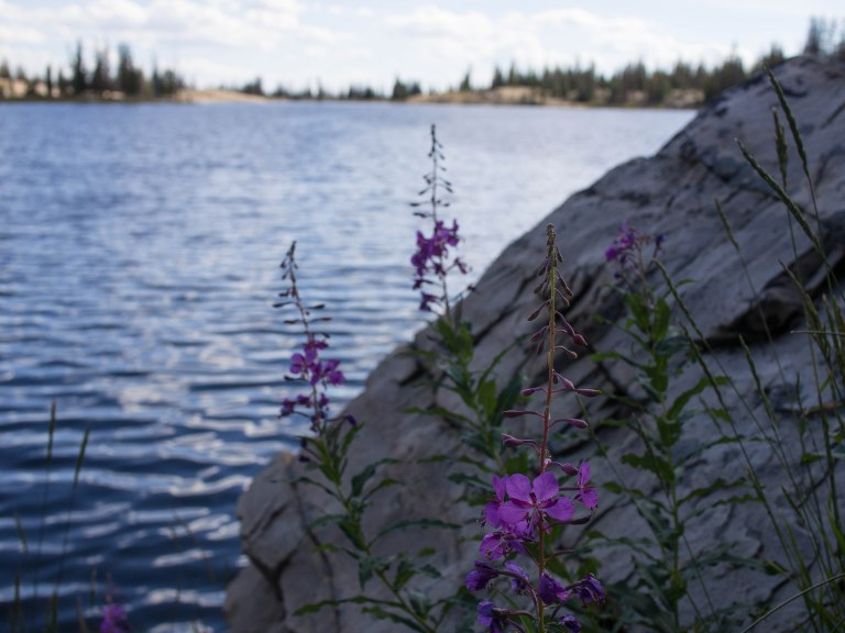 Lake and flowers.
