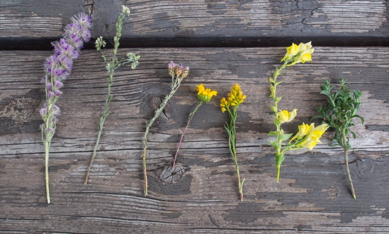Lars' collection of wildflowers